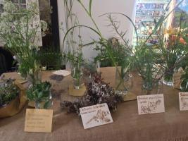 Bellissima esperienza alla nostra prima Mostra di erbe spontanee
