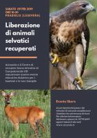 Liberazione a Pradielis di animali selvatici recuperati